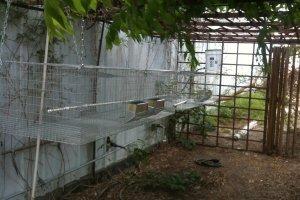 Rabbit Cages
